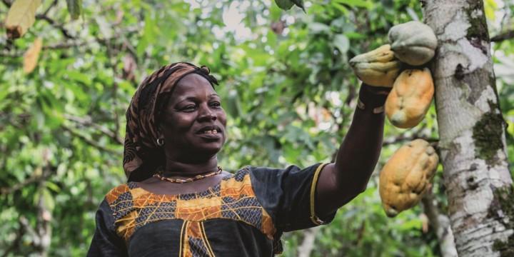 Програма сталого розвитку для какао-фермерів Cacao-Trace